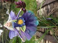 Anemone by The Fairy Family